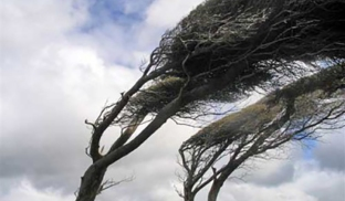 vento-1